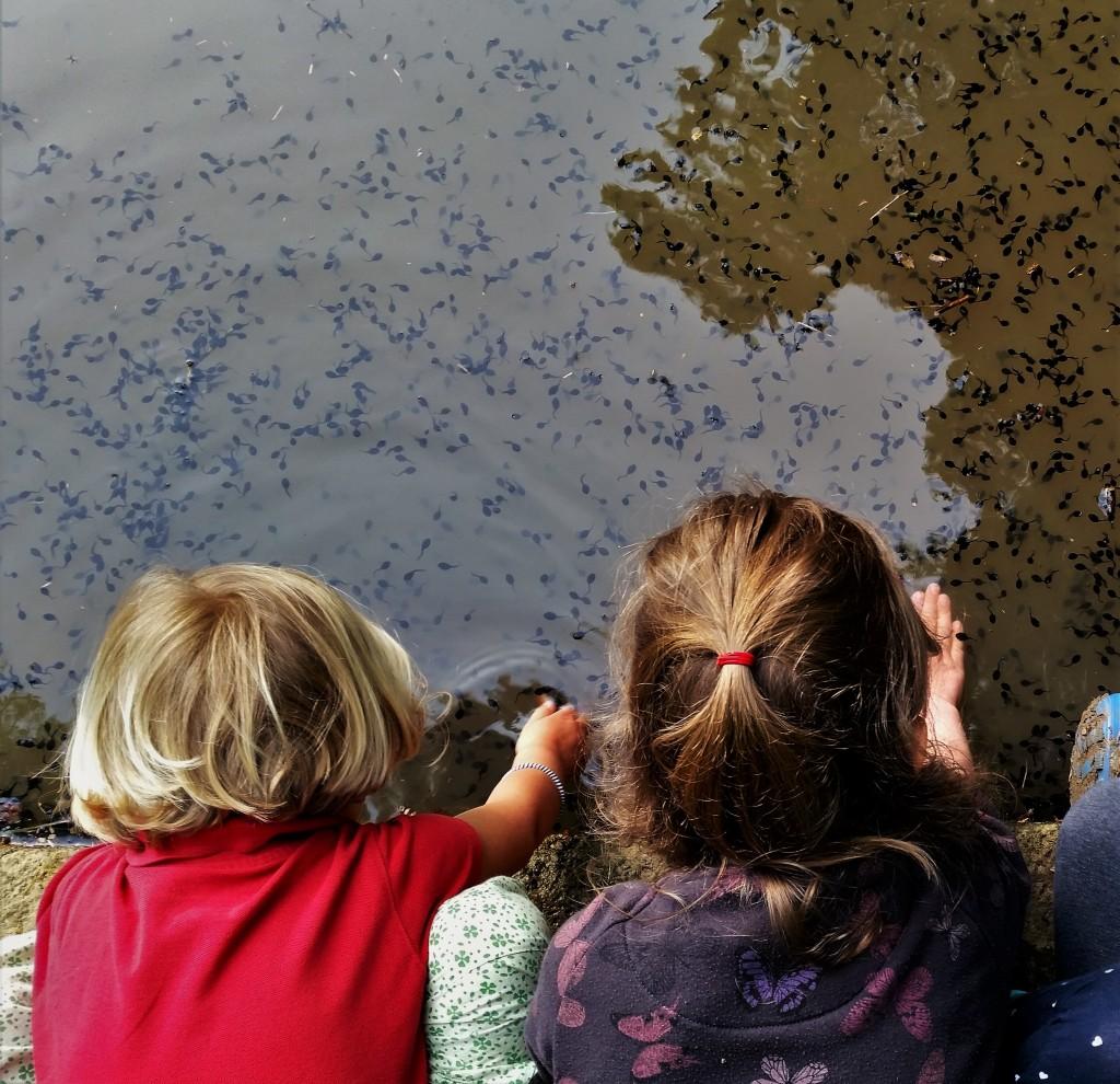 Kaulquappen-Kindheit-Natur-Tiere-Biologie-Freiheit-ortsunabhängig-reisen mit Kind