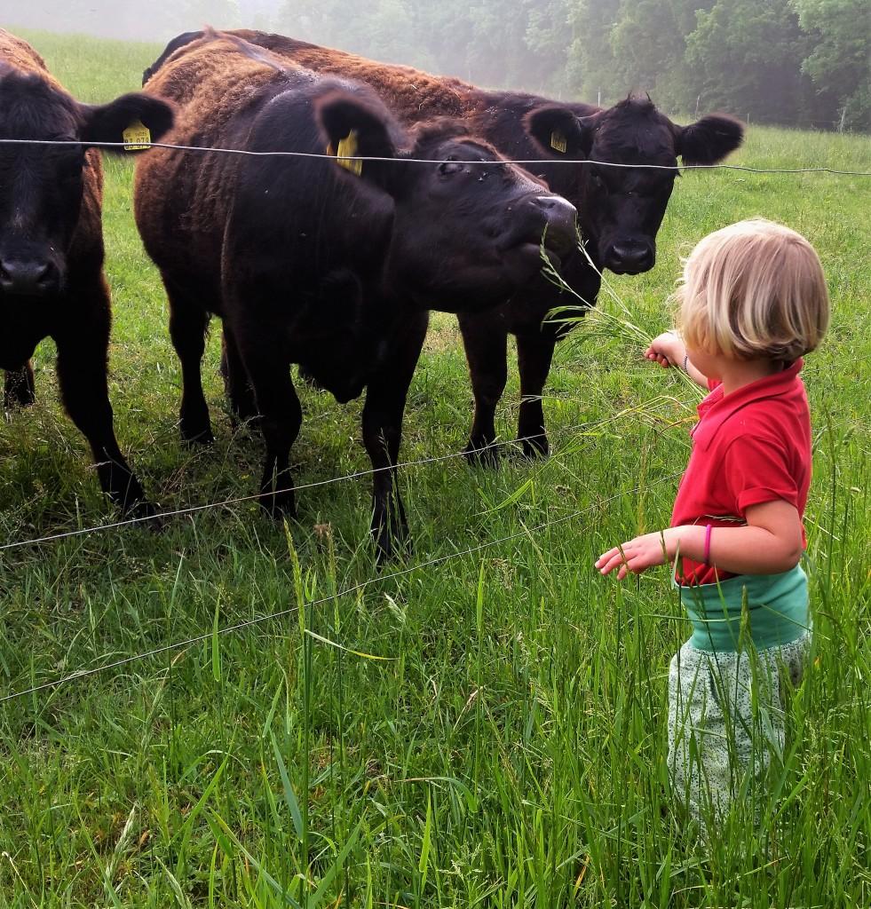 Bio Rinder-Bio-Organic-Wochenende-Landluft-Rohda-Thüringen-Familie-reisen mit Kind
