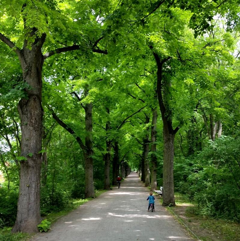 Luisenpark- grün- alte Bäume- Kindheit- Laufrad fahren-Allee-Erfurt-Thüringen