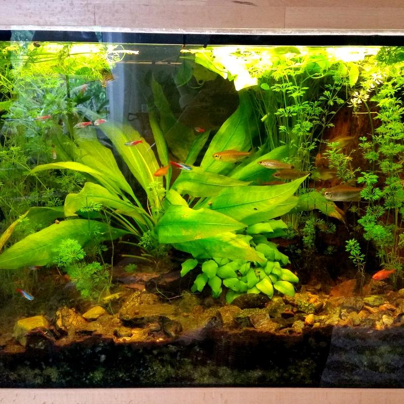 natürliches TV- Aquarium- Zierfische- Bildung- Seele- Ruhe- chillen