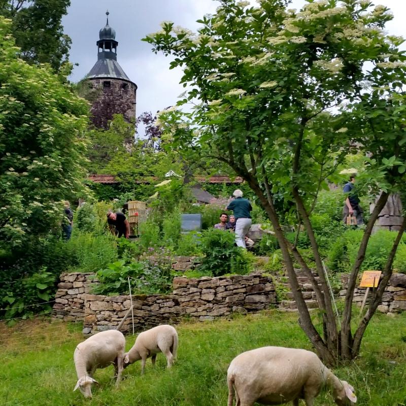 Schloss Tonndorf- Gemeinschaft- Genossenschaft- Schafsmilch- Weimar- Thüringen