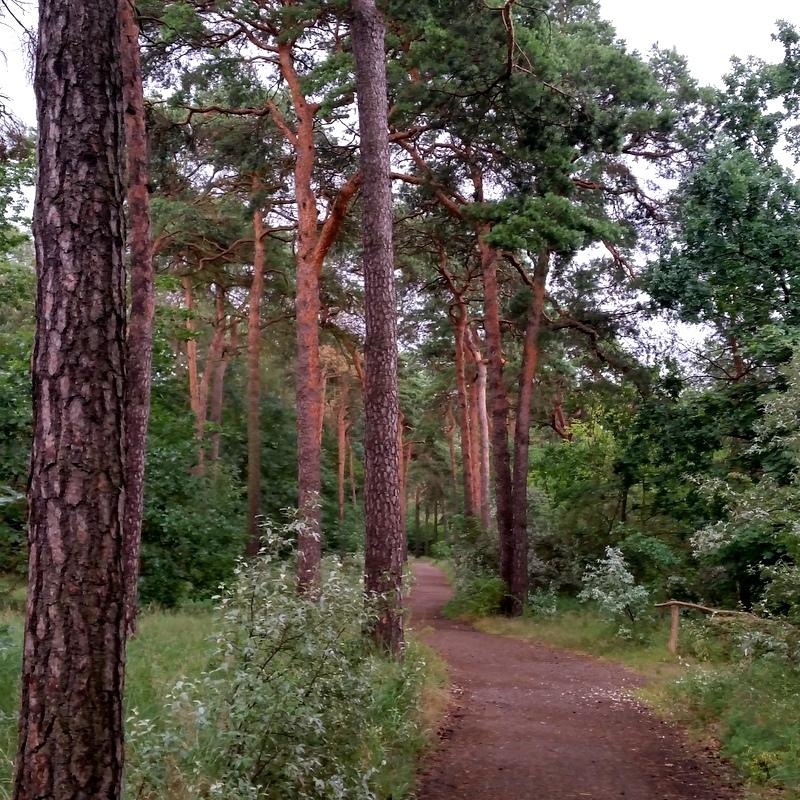 Müggelsee- Berlin- Heimat- Nadelwald- Fahrradweg-Wochenende- ortsunabhängig