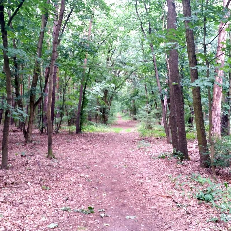 Waldweg- Wald- Ruhe- Arbeitsweg- Ausspannen-Meditation-Energie