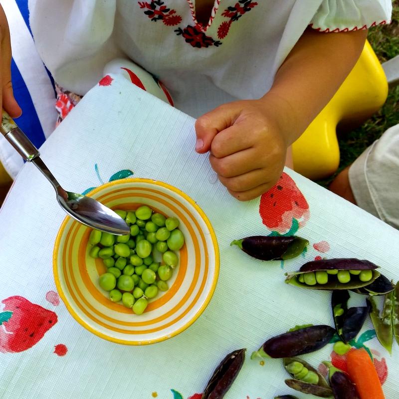 frische Erbsen-Rohkost Mittag fürs Kind-